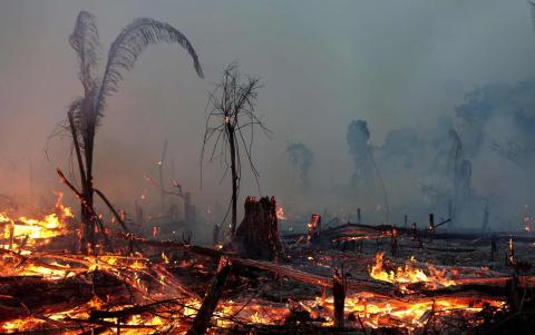 What Is Burning the Amazon?