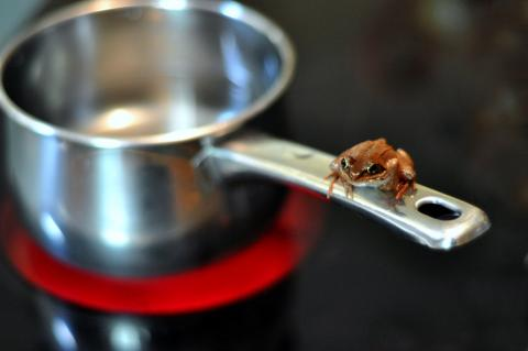 The boiling frog is a fable describing a frog being slowly boiled alive. The premise is that if a frog is put suddenly into boiling water, it will jump out, but if the frog is put in tepid water which is then brought to a boil slowly, it will not perceive the danger and will be cooked to death.