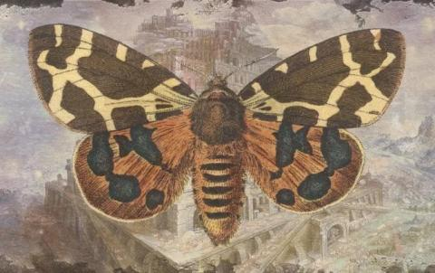 But the butterfly motif...what does it mean? We need to know!