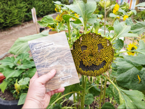 What have you done to this sunflower?