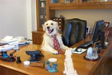 our unpaid intern waiting to take your calls