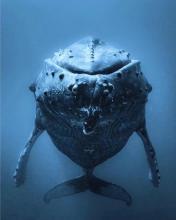 a sleeping whale
